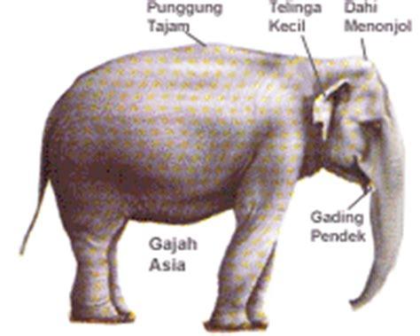 Janin Berumur 2 Bulan Gajah Hardi Kasanwikarto