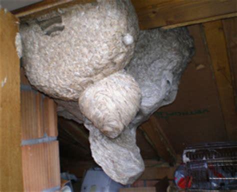 wespen bekaempfen vertreiben beseitigen und entfernen