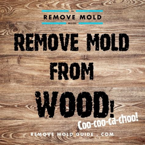 remove mold  wood  guide  mold removal