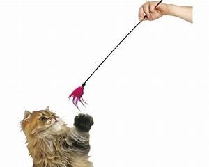 Jouets Pour Chats D Appartement : karlie jouet pour chat plumeau acheter sur ~ Melissatoandfro.com Idées de Décoration