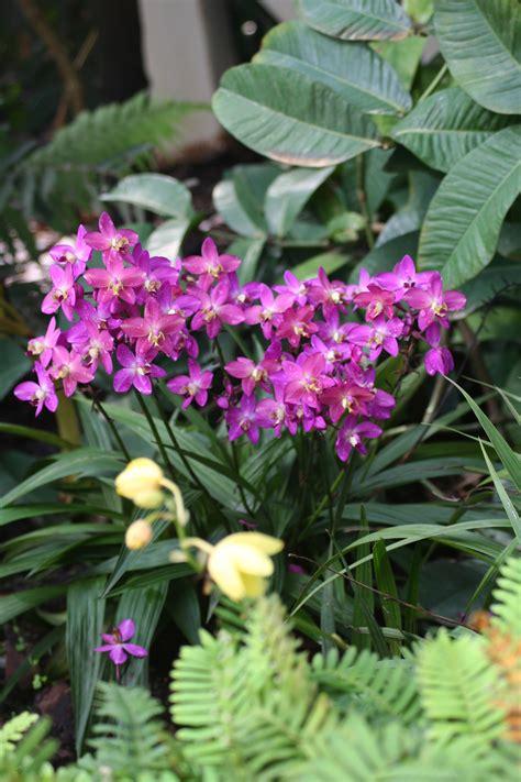 heat tolerant plants  containers