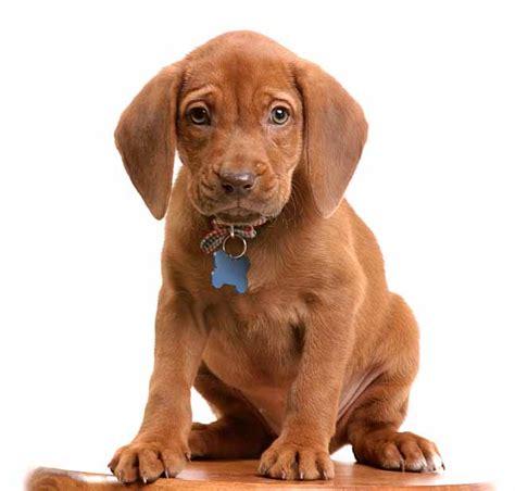 german dog names perfect  german breeds