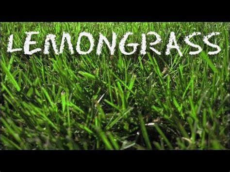 lemongrass lemongrass coconut soup tom ka gai