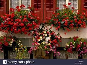 Blumen In Der Box : blume boxen flowerboxes blumen in bl te bl hende dorf von schmitten graub nden kanton der ~ Orissabook.com Haus und Dekorationen