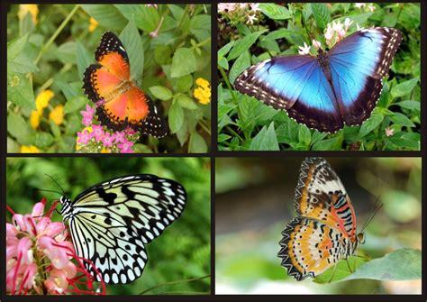 farfalle nel lazio romanatura