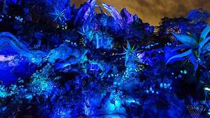 Visiting Pandora: a photo tour of Disney's new Avatar land ...