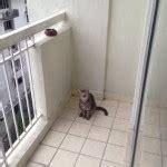 balkon sichern katze die schlimmsten gefahren f 252 r ihre katze haustierisch de