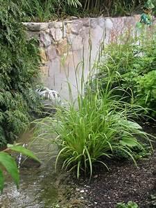 Carex Hachijoensis Evergold Pflege : immergr ne ziergr ser mein sch ner garten ~ Lizthompson.info Haus und Dekorationen