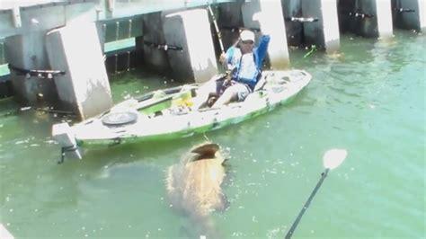grouper caught record florida breaking