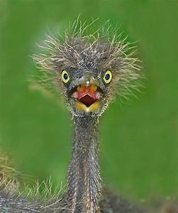 36 best Ostrich-funny faces. ~**~ images on Pinterest ...