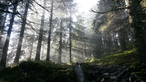 Free photo: Forest in Norway - Drammen, Forest, Forested ...