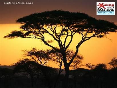 African Sunset Wallpapers Safari Themed Theme Wallpapersafari