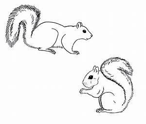 Squirrel clipart easy draw - Pencil and in color squirrel ...