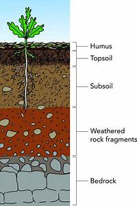 Soil Horizons  Humus  Composition  Ph  And Permability
