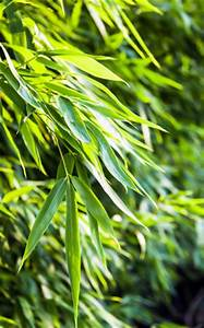 Bambus Pflanzen Kübel : bambuspflanzen fargesia pflege anleitung ~ Frokenaadalensverden.com Haus und Dekorationen