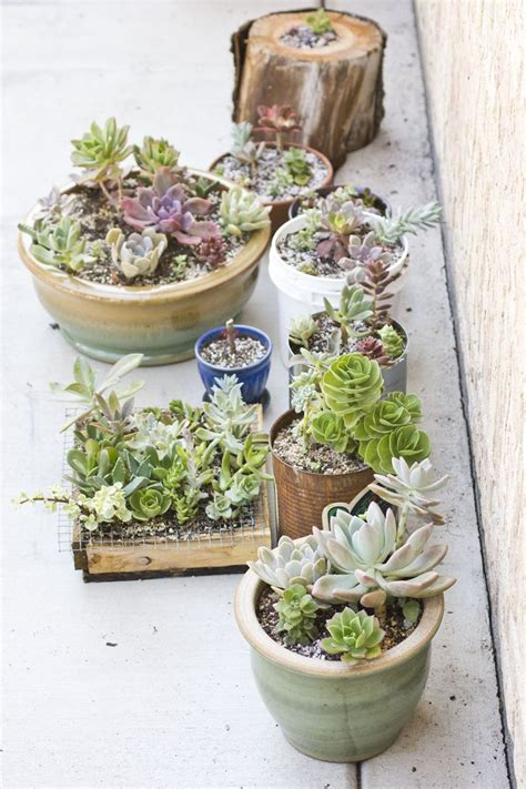 potting succulents indoors the 25 best repotting succulents ideas on pinterest succulent care succulent terrarium diy
