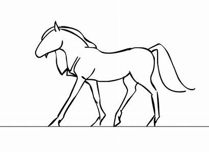 Horse Walking Draw Hoof Animation Drawings Gifs