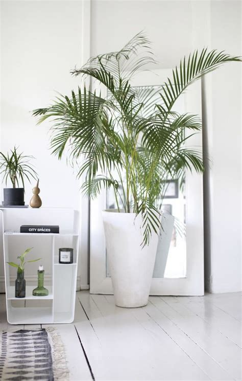 ideas  decorar tu hogar  plantas
