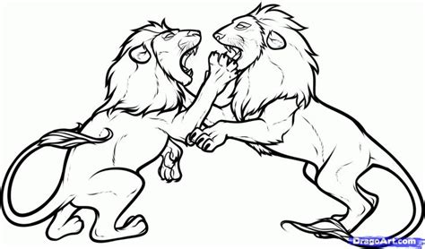Wolf Fighting Lion Drawing