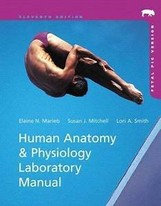 Human Anatomy And Physiology Laboratory Manual Fetal Pig