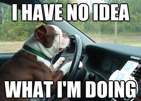 Dog In Car Meme - collection of funny driving quotes and car memes shearcomfort automotive blog
