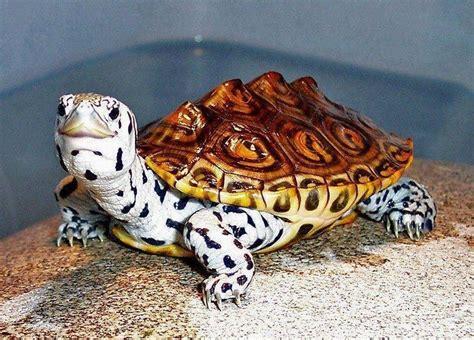 ten   worlds rarest   unusual turtles