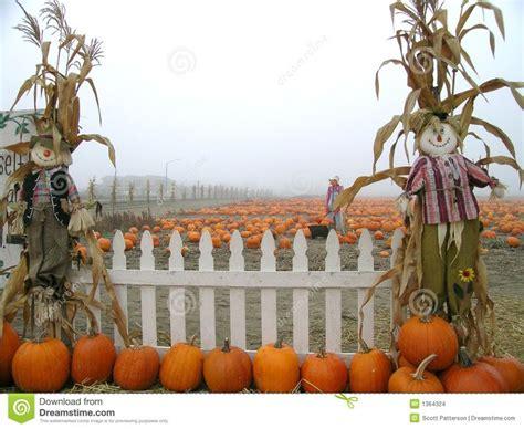 images  halloween  pinterest pumpkins