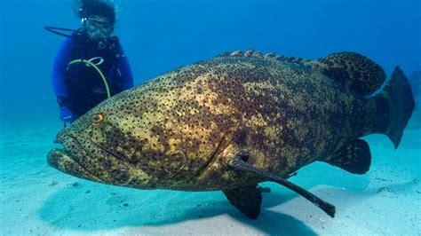 top   endangered fish species