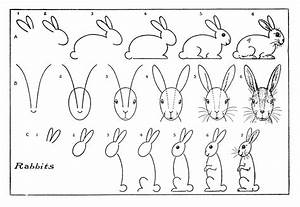 Lines from the Art Room: How to Draw a Rabbit