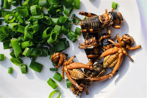 nordic food labs guide  eating insects