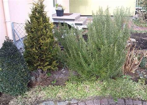 Immergrüne Pflanzen Für Den Garten Im Winter