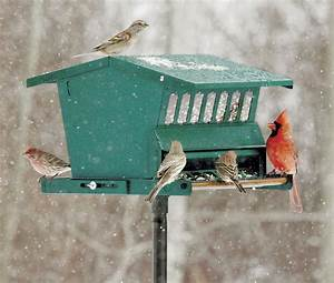 Duncraft com: Original Absolute Squirrel Proof Bird Feeder