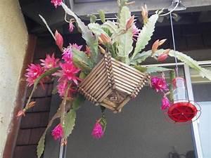 plantes epiphytes entretien accueil design et mobilier With idee decoration jardin exterieur 11 cactus entretien arrossage et rempotage
