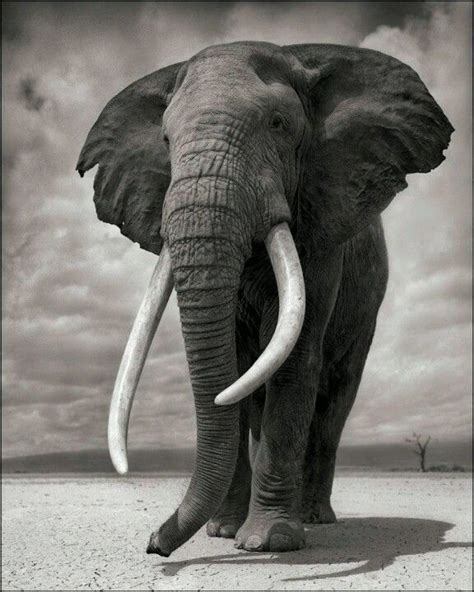 nick brandt expose  monde en voie de disparition  la