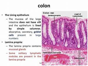 HISTOLOGY OF THE GIT (ONE) cont…. - ppt video online download