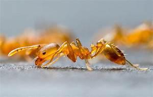 Ameisen Bekämpfen Wohnung : wie man aus einer wohnung ameisen holt ~ Michelbontemps.com Haus und Dekorationen