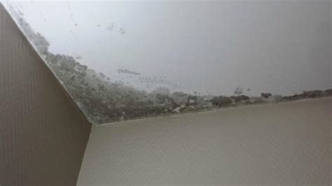 humidité plafond chambre humidité et moisissures au plafond photo de hotel