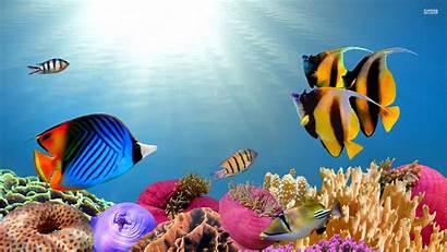 Fish Tropical Desktop Theme Wallpapers Backgrounds Saltwater