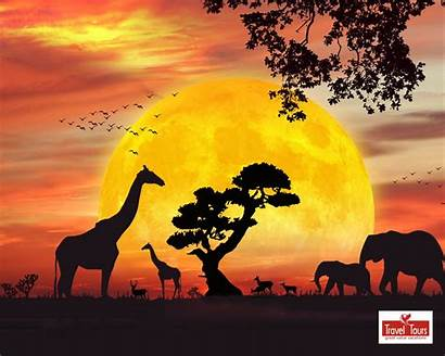 Safari Wallpapers Jungle Clipart African Silhouette Sunset