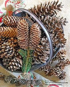 Pine, Cone, Musings