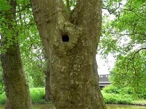 Comment Creuser Un Tronc D Arbre : arbres creux cavit s et trous d 39 arbre ~ Melissatoandfro.com Idées de Décoration