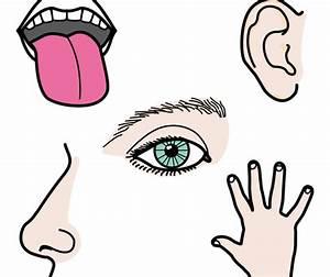 UNIDAD DIDÁCTICA LOS SENTIDOS Maestros de Audición y Lenguaje