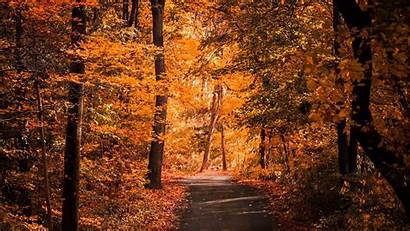 Trees Autumn Alley Foliage Path Road Forest