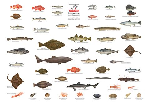 ingason seafood  ingason seafood iceland prima