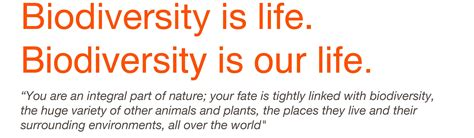 Another Word For Vast by International Year Of Biodiversity