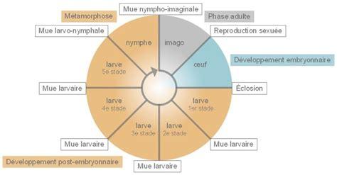 les cycles de vie des insectes codex virtualis