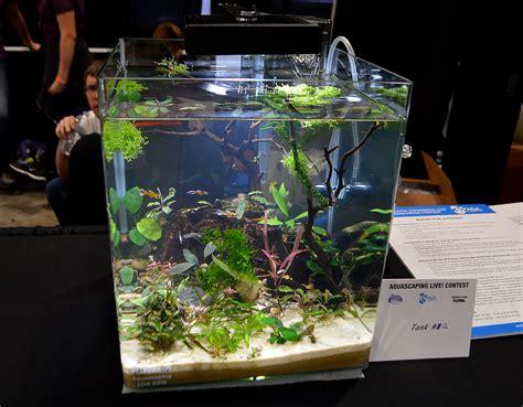 Aquascaping Aquarium Planted Tanks