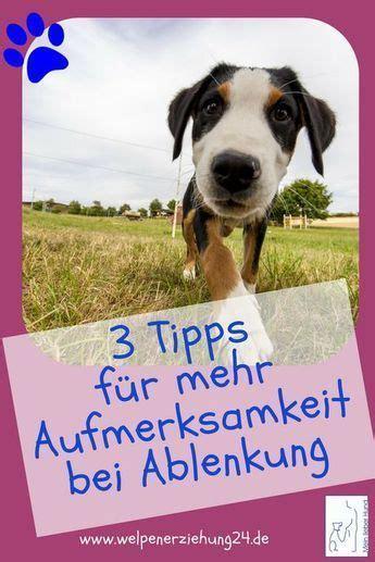 klasse tipps damit dein hund draussen auf dich achtet