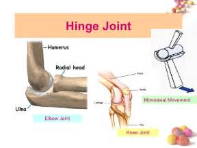 Hinge Joint