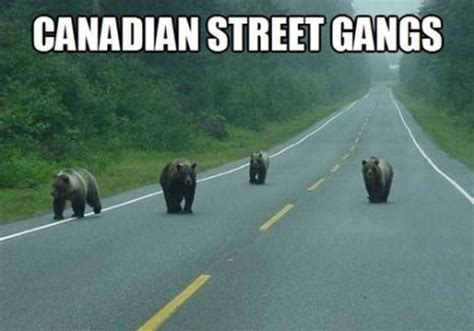 Canada Memes The 25 Best Canada Memes About The World S Nicest Country